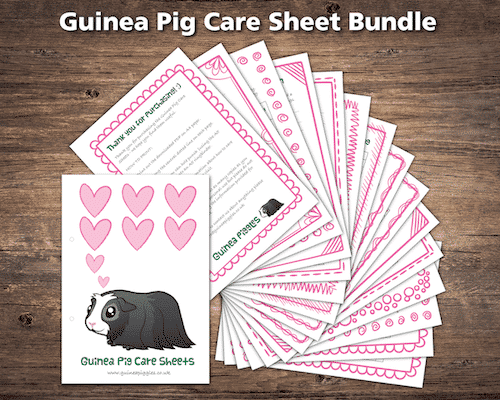Set of Guinea Pig Care Sheets in Pink to download and print (pdf)