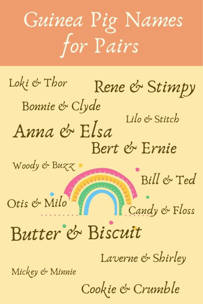 guinea pig names for pairs